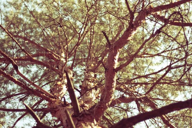 Хвойный матвеевский лес