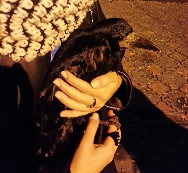 Рая - ворона-грач :)
