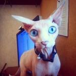 Смотрит котейка, пялится :) @kitaskvortsov