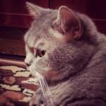 Продолжу постинг но уже своим котиком! И, да. Мы опять 8! :)