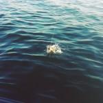 Сегодня был очень длинный день. И я только добрался до инстача) Утренняя #рыбалка с батей. Без мотора пока( Поэтому мелкотня одна - чиста кота побаловать. 1) сорвался бычок; 2) не сорвался бычок))