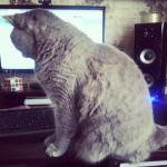 Ну.. это мой кот :)